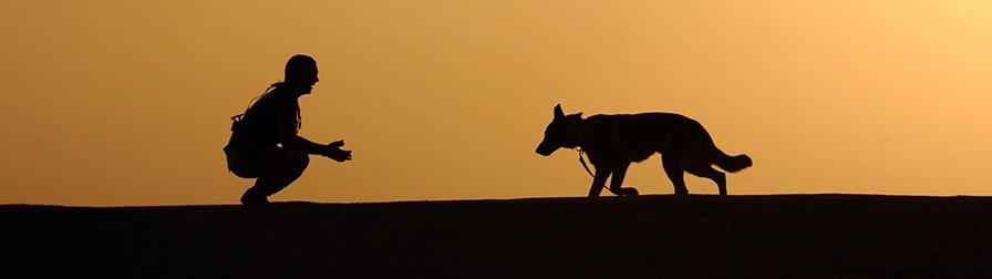 Kenndecken für Rettungshunde