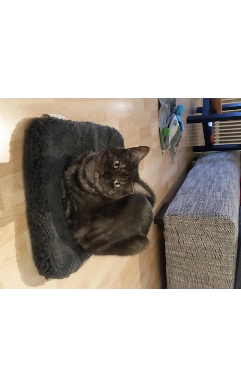 Katzendecke kuschelig und weich