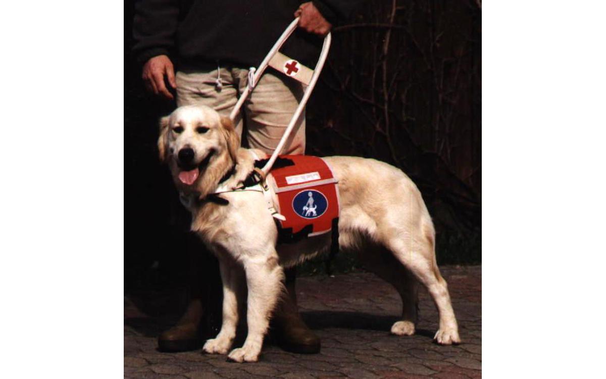 Kenndecke für Führhunde und Blindenhunde am Geschirr zu befestigen mit Hundebild