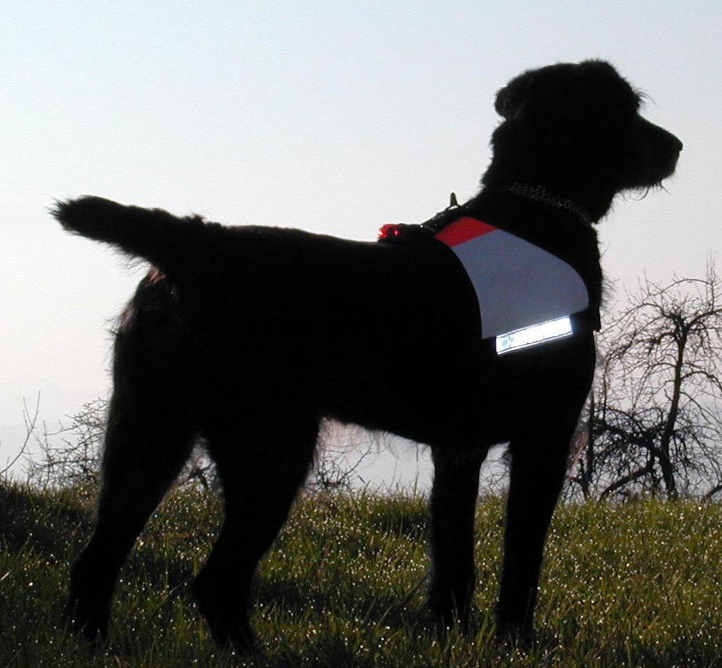 Kenndecken für Rettungshunde auf Hund