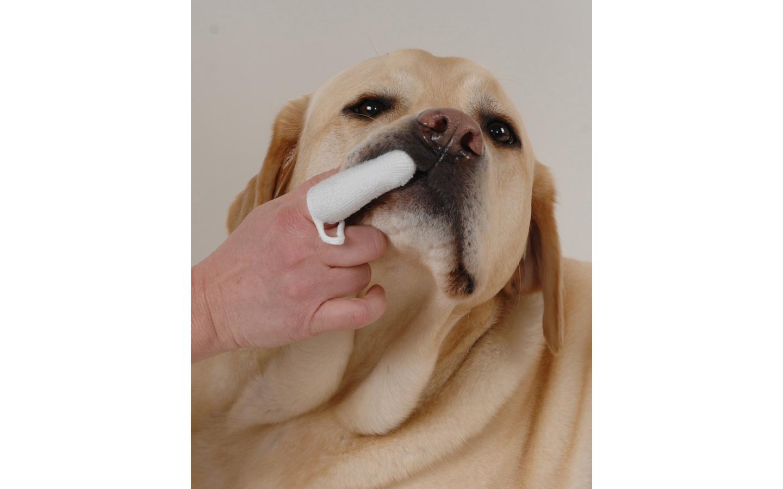Hundefinger Hundefingerling Zahnreinigung Hund