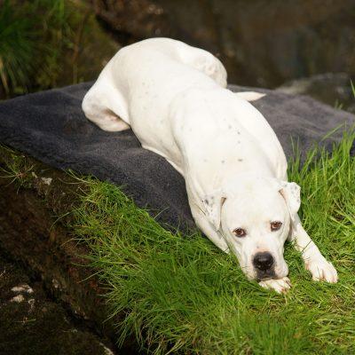 Hundedecke, Hundebett - Hundepflege