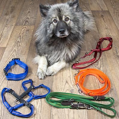 gepolsterte Hundeleinen, bequeme Hundehalsbänder und Hundegeschirre