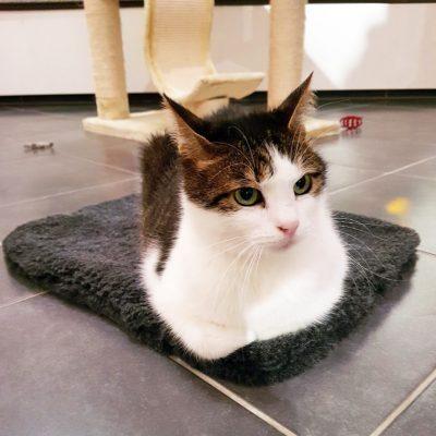 Katzendecken, Katzenbett