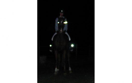 Reit Stiefelbeleuchtung Pferd von vorne sichtbar
