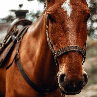 Restposten Pferdeartikel