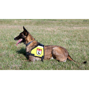 Explosive Detection Dog Unit